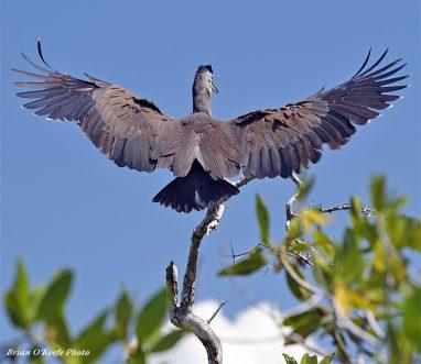 Bird viewing at Espiritu Santo Bay Lodge