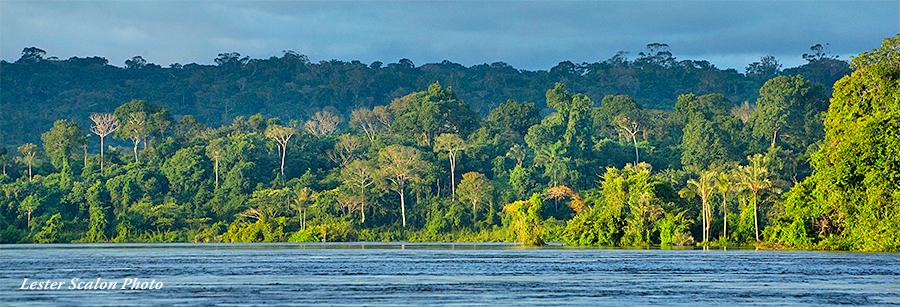 Jungles of Brazil