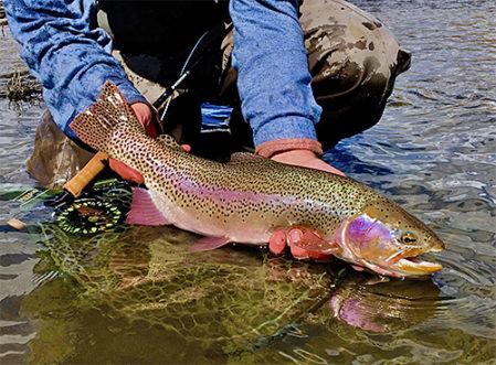 Greg Bricker - Shields River Lodge - rainbow trout